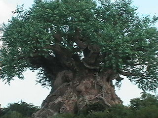 Disney's Animal Kingdom - Disney World Orlando Florida  picture
